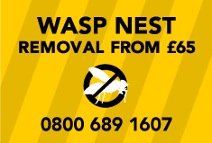Wasp Nest Removal, Bee Relocation and Horenet Nest Treatment