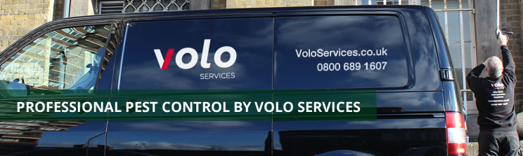 Pest Control Company in London